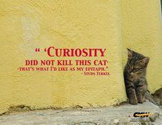 Curiousity9