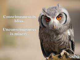 Bliss 8