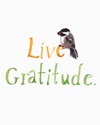 Gratitude13