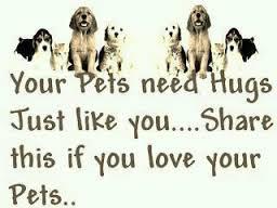 pets 8